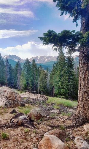 I Love the Mountains! Tree Nature No People Mountain Sky Day Cloud - Sky Beauty In Nature Outdoors Scenics Forest Rocky Mountain National Park Wild And Beautiful Colorado Rocky Mountains Hiking Hiking Adventures Hiking❤ Colorado Landscape