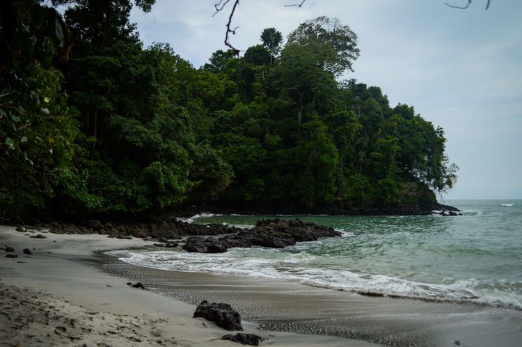Manuel Antonio Manuel Antonio National Park Costa Rica 🇨🇷 Manuel Antonio Park Beach Beauty In Nature Day Growth Jungle Nature No People Outdoors Rock - Object Sand Scenics Sea Tranquility Tree Water