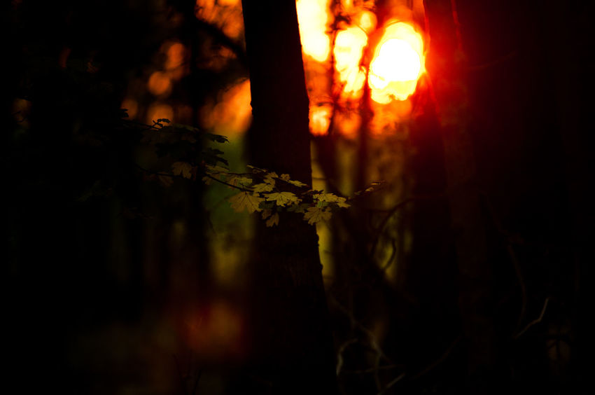 Contrast Erdő Forest Forest Park Landscape Night Outdoors Photography Summer Sunset Tree