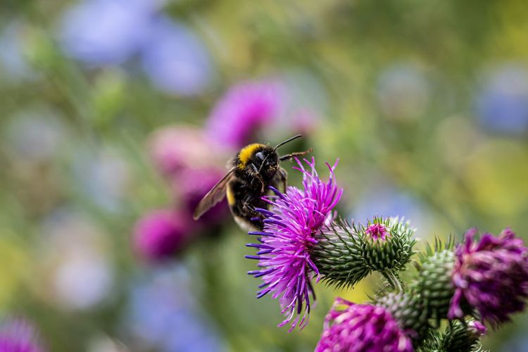 Flowering Plant Flower Invertebrate Insect Animals In The Wild Animal Themes Animal One Animal Animal Wildlife Bee Plant Fragility Vulnerability  Flower Head Beauty In Nature Freshness Petal Close-up Growth Pollination