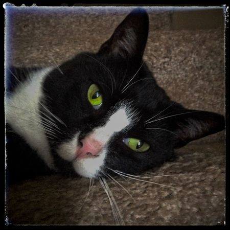 Cat Pets Katze Feline Catface IPadography Ipad