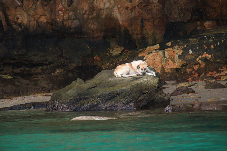 View of cat resting on rock formation