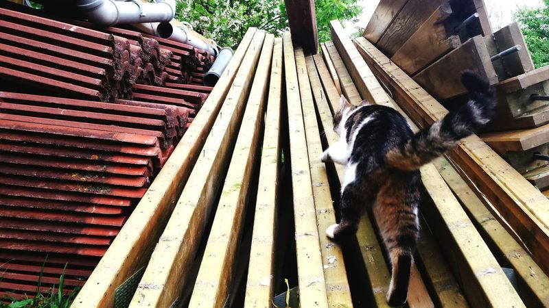 Animal Themes Domestic Animals One Animal Mammal Day Outdoors Wood - Material No People Pets Domestic Cat Buildingmaterial Ziegelsteine Business Stories