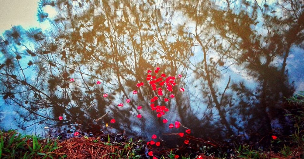 Reflexo  Whater Reflection Flower Nature No People Beauty In Nature EyeEmNewHere EyeEmNewHere