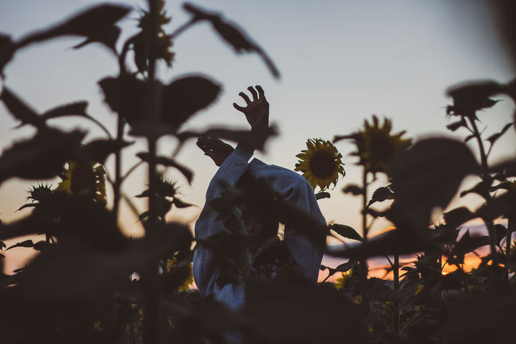 Woman Body Part Human Body Part Hand Hands Field Sunflower Sunflower Field Plant Tree Nature Human Representation Selective Focus Representation Sky Male Likeness Art And Craft Sculpture Statue Silhouette Creativity No People Outdoors Growth Day Focus On Background