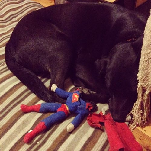 Bosslovessuperman Securitytoy Cutepuppy Dog love
