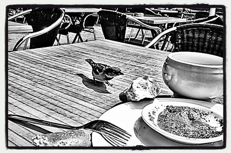 S/w Black And White gemeinsames Frühstück am Lietzensee