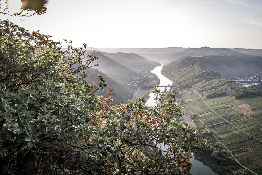 Plant Beauty In Nature Growth Nature Day Tree Scenics - Nature Green Color Sky No People Mountain Outdoors Tranquility Environment Tranquil Scene Landscape Freshness High Angle View Leaf Agriculture Plantation Mosel Mosel River In Germany Mosel Valley Moselschleife