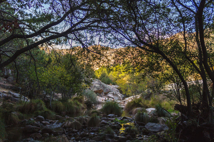 The sierra in Madrid is a wonderful place when its going through the season change. Autumn Autumn Colors Madrid SPAIN Sierra Trees Day Nature No People Outdoors Valley
