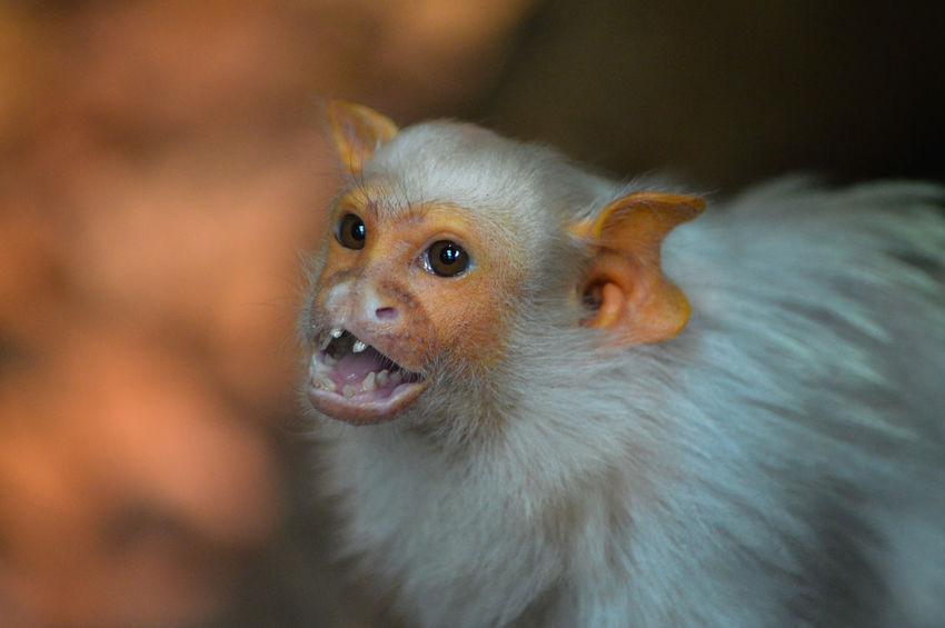 Animals Monkey Zoo