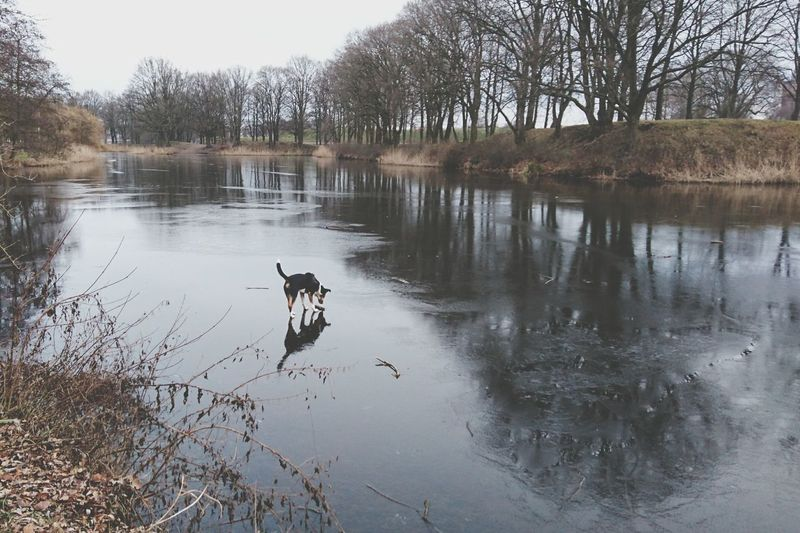 Dog Standing On Ice Roef!! Water Tree Reflection Lake Nature Animal Themes No People Beauty In Nature Animals In The Wild Outdoors Day Sky