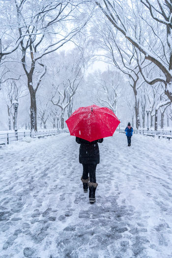 Female with a red umbrella walking on the snow in Central Park . Central Park Red Umbrella Winter Cold Temperature Nature Outdoors Protection Rear View Snow Snowing Tree Umbrella Walking Winter Winter Wonderland