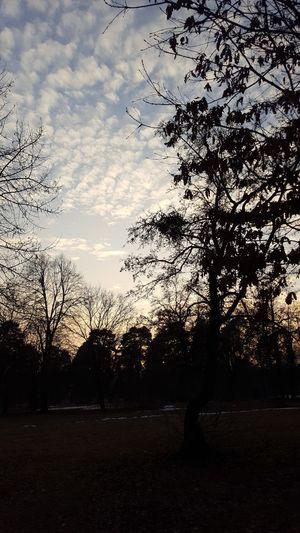Nature Sun Intersting Beautyful  First Eyeem Photo