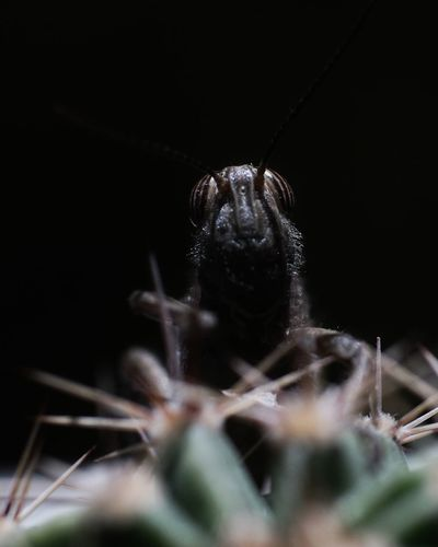 Confined Space Trapped Black Background Insect Spider Close-up Arachnid Arthropod Animal Scale Web Invertebrate Animal Antenna Chachoengsao Animal Leg