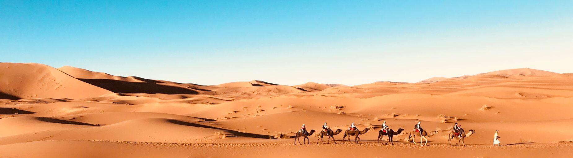 Sahara desert Morocco Desert Sand Dune Sand Arid Climate Clear Sky Camel Nature first eyeem photo