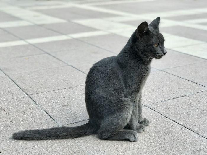 Cat sitting on tiled floor
