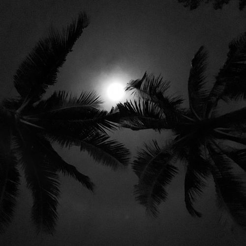 Palm Tree Low Angle View Tree Growth No People Sky Nature Silhouette Tranquility Beauty In Nature Night Close-up Outdoors