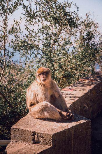 EyeEm Nature Lover EyeEmNewHere EyeEm Best Shots Monkey Sitting One Animal Animal Wildlife Animals In The Wild Full Length Mammal No People Baboon Day Outdoors Tree Ape Animal Themes Nature
