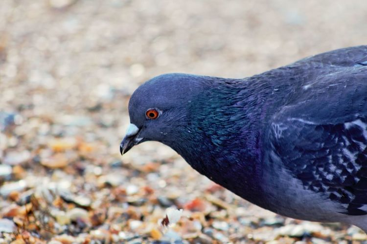 Beauty In Nature Bird Colors Dove EyeEm Gallery Macro Birds Macro Dove Urban Birds EyeEmNewHere Place Of Heart