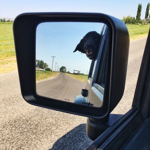 Dog reflecting on side-view mirror of car