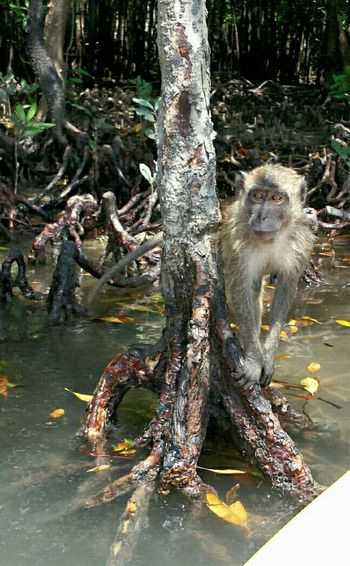 Monkey Canoing Mangrove Forest Mangrove Life POVshots Koh Lanta Holiday Memories Holiday POV Capture The Moment