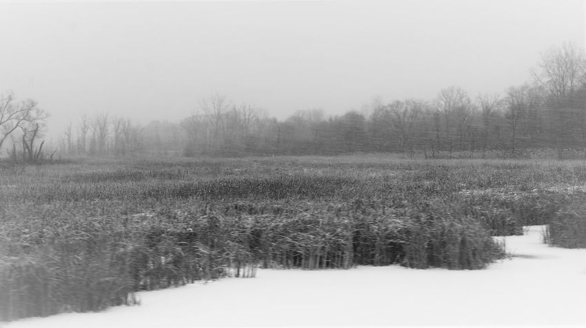 Winter Marsh Beauty In Nature Black And White Cold Temperature Day Fog Forest Frozen Landscape Nature No People Outdoors Pine Tree Rural Scene Scenics Sky Snow Snowing Tranquil Scene Tranquility Tree Winter WoodLand