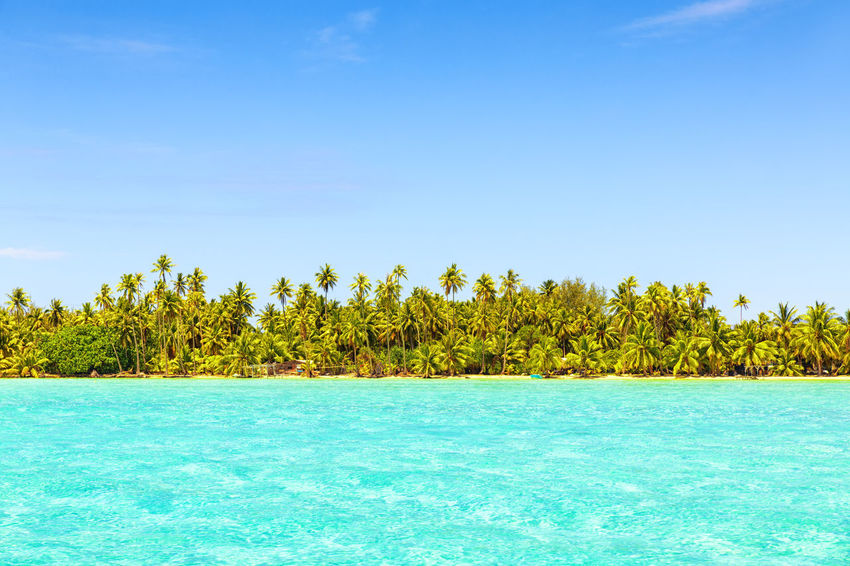 Line of coconut palm trees with turquoise sea on tropical beach Blue Bora Bora  Clear Sky Coastline Coconut Palm Tree Lagoon Water Landscape No People Ocean Outdoors Palm Tree Scenics Summer Sunlight Tahiti ❤ Tropical Turquoise Water Vacations Water