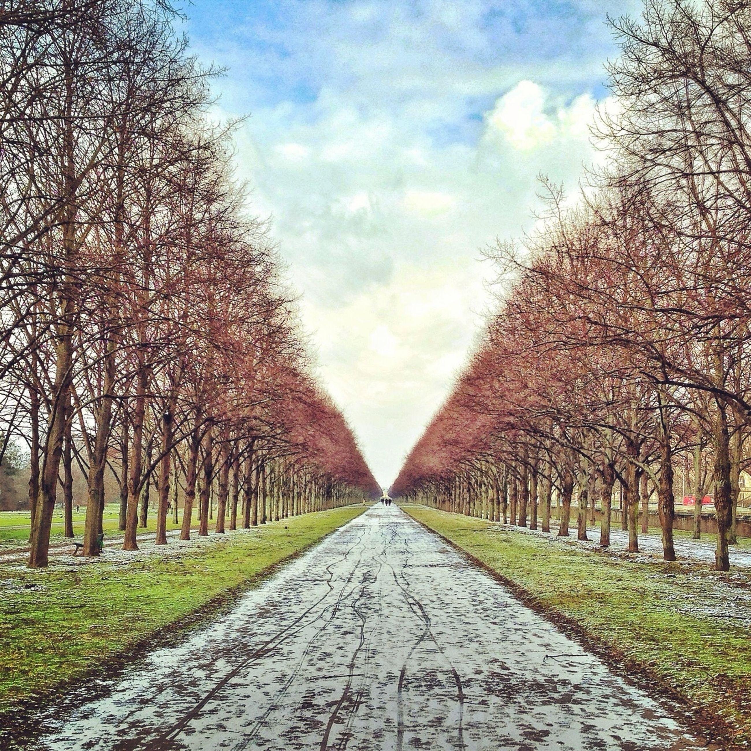 TREES ALONG FOOTPATH