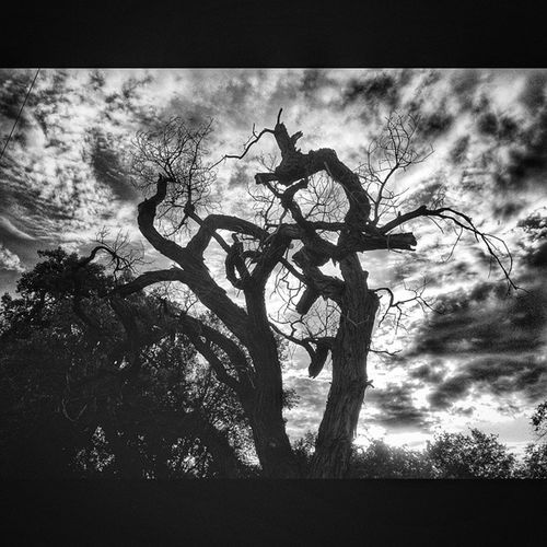 Deadtree Cottonwood Bnw Blackandwhite hdr_gallery str8hdr hdrart hdrimage hdr_edits hdrmania hdr_lovers hdrphoto hdrama hdriphoneographer hdrphotography sky skyporn skyloversepicsky crazyclouds cloudy instaclouds beautifulday sunnyday igersabq dukecityigers squaredroid snapseed purenm skylovers albuquerque_skies