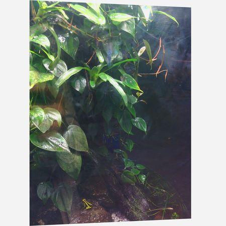 Forest Frogs Vancouveraquarium