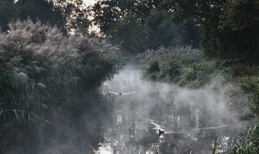 Scenic view of ground level fog at a creek