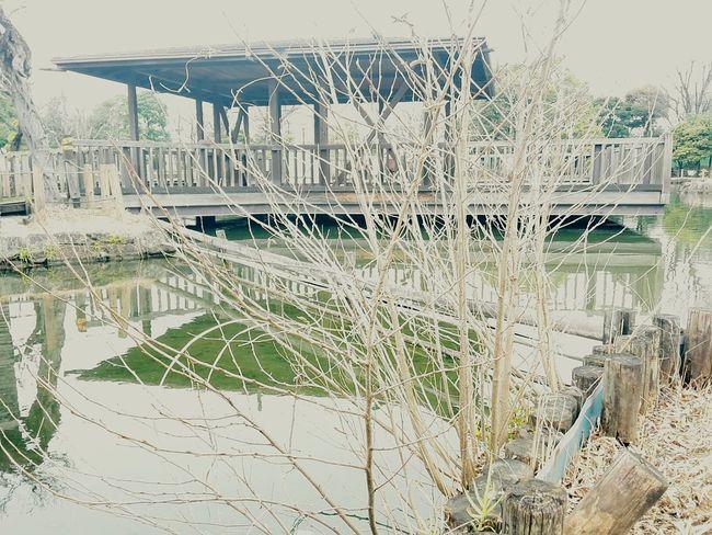 Plant Day Nature Outdoors No People Architecture Lake Machiya Tokyo Japan Wood
