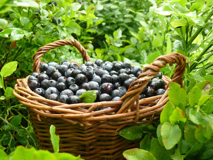 Close-up of grapes in basket