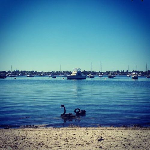 Another beautiful day here in Perth. 😌🌞 Perth Perthlife Swan Peppermintgrove Yacht Beautifulday Summer River ThisisWA Australia Inst_australia WesternAustralia Seeaustralia Wildlifeofaustralia Wildlifeofperth Chemodiver