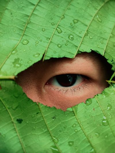 Close-up of a man looking through hole in leaf
