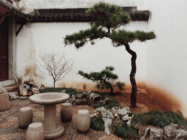 Tree Growth Plant No People Nature Day Outdoors Pot Architecture Su zhou