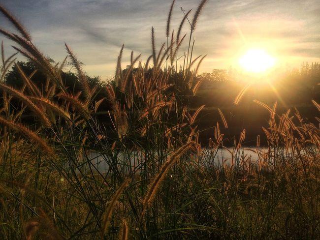 อากาศ ทำให้คนอารมดี EyeEm Nature Lover Beauty In Nature Soaking Up The Sun
