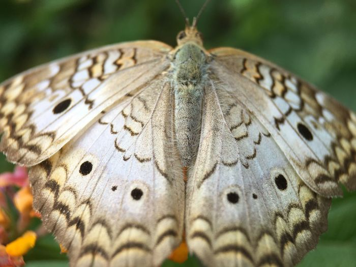 Nature Photography Macro Photography Butterfly
