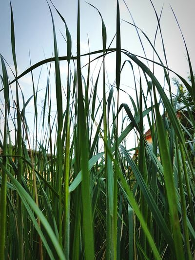 Wiese  Pure Nature Grass And Sky The Essence Of Summer Beautiful Day EyeEm Green Nature Hello World EyeEmBestPics Nature_collection Natur Pur