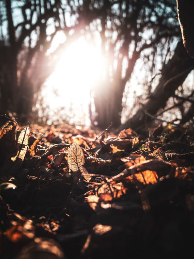 Tree Land Sunlight Nature Forest Selective Focus Day Plant No People Outdoors Falling Plant Part Leaf Tranquility Dry Field Sky WoodLand Sunbeam Lens Flare Leaves Bright Surface Level Change