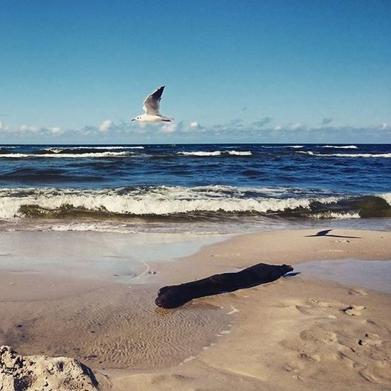 Balticsea Sea Nature Magic Moments Sunny Sun Bluesky Holiday Trip Happiness Relax EwaJoannaMatczyńskaPhotography