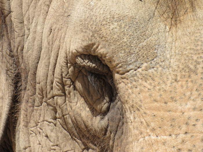 Sleeping Elephant African Elephant Animal Body Part Animal Skin Animal Themes Animal Wildlife Animals In The Wild Close-up Day Elephant Eye Lash Full Frame Mammal Nature No People One Animal Outdoors Sleeping Textured