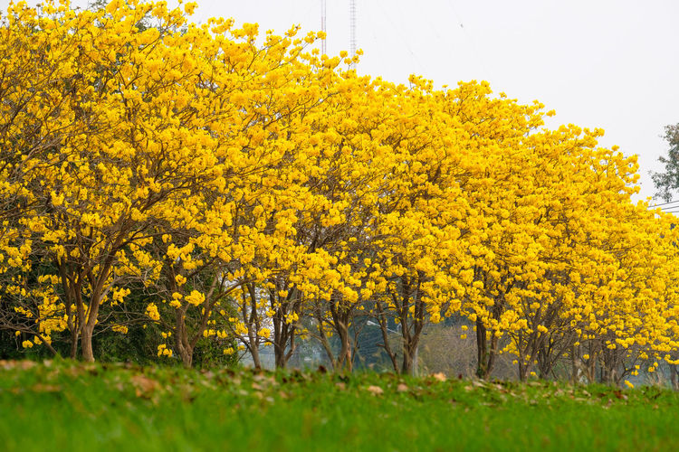 Yellow Plant Beauty In Nature Tree Nature Autumn Land Day Grass Change Tranquility Field Scenics - Nature One Person Outdoors Landscape Flower Tranquil Scene Growth Flowering Plant