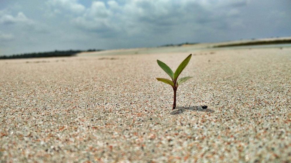 Extraordinary Nature Extraordinary Things Growth Nature Backgrounds Sand Nature Plant Outdoors No People Close-up Day Sky Beauty In Nature EyeEm EyeEm Gallery EyeEmNewHere Break The Mold