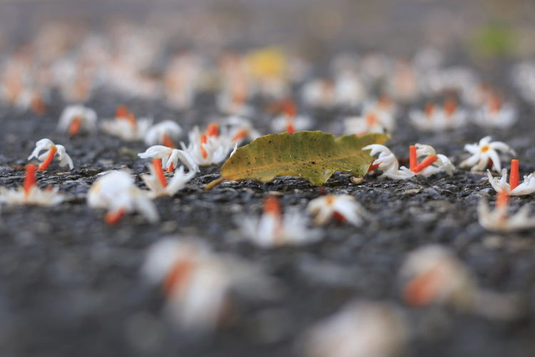 Ground Floor Orange Flower Stalk Small Flowers Close-up Day Drop Falling Flowers Flower Flower Stem Land Nature On The Road Outdoors Road Surface Selective Focus Surface Level White Petals White Petals Flower White Petals..