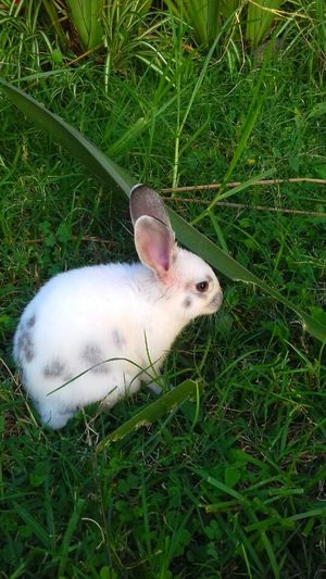Rabbit 🐇 Rabbits Rabbit♡ Rabbits 🐇 Rabbit Rabbit ❤️