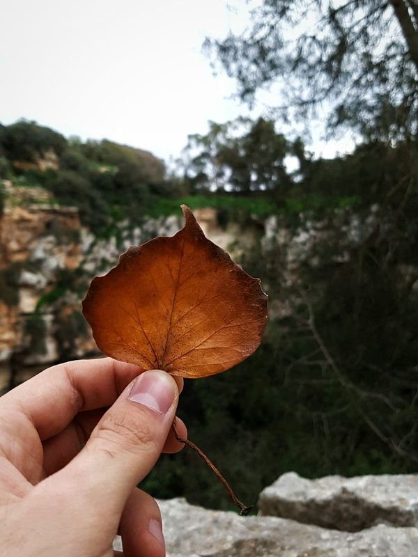 Human Hand Human Body Part Nature Tree Autumn Real People Focus On Foreground Outdoors Close-up Change One Person Leaf Day People Adapted To The City EyeEmNewHere