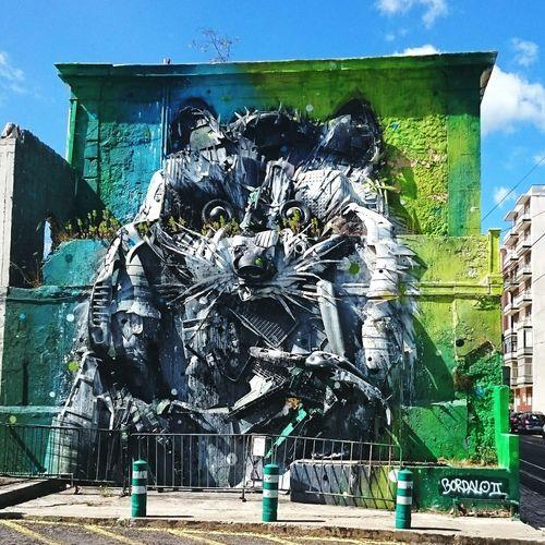 Raccoon Graffiti City Lissabon Streetart