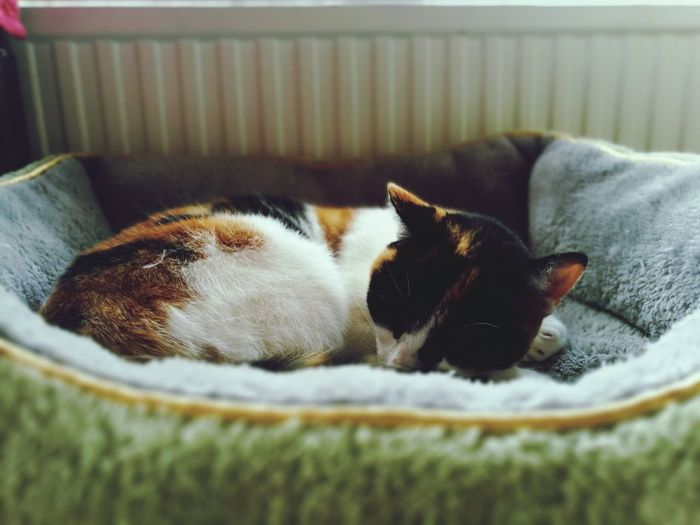 Pets One Animal Animal Themes Domestic Animals Sleeping Mammal Domestic Cat Animal Lying Down No People Indoors  Feline Relaxation Close-up Day