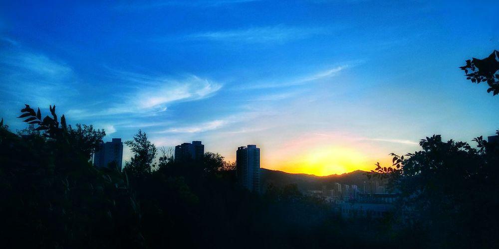 Sunset of Peak City Tree Cityscape Urban Skyline Sunset Skyscraper Blue Silhouette Sunlight Sky Sun Romantic Sky